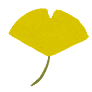 公園の綺麗なイチョウの落ち葉